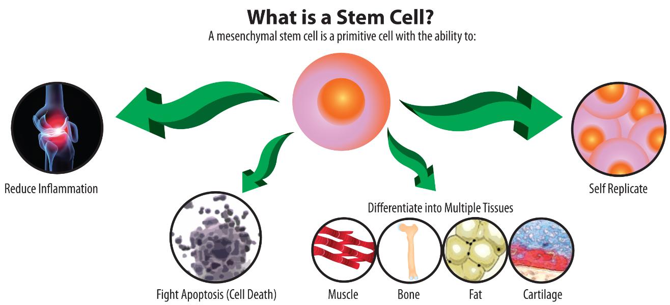 Stem Cell Image
